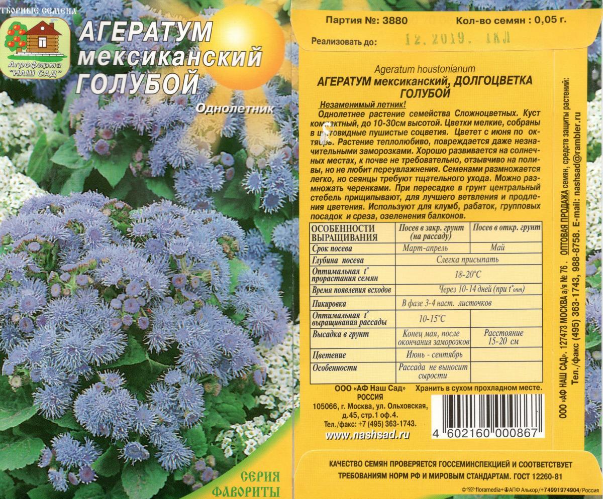 Цветы агератум синий фото