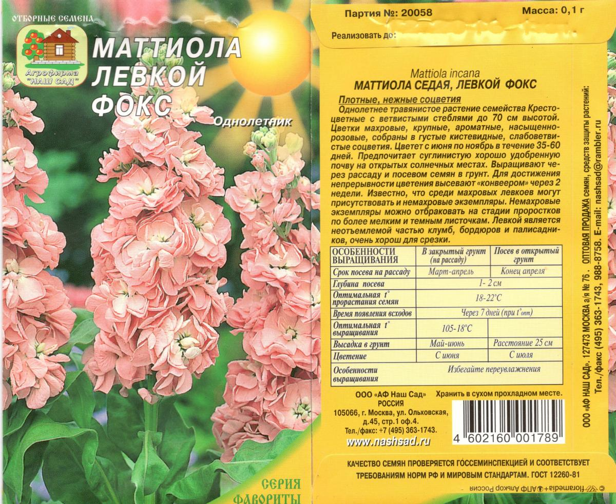 Цветок левкой: посадка и уход в открытом грунте, фото