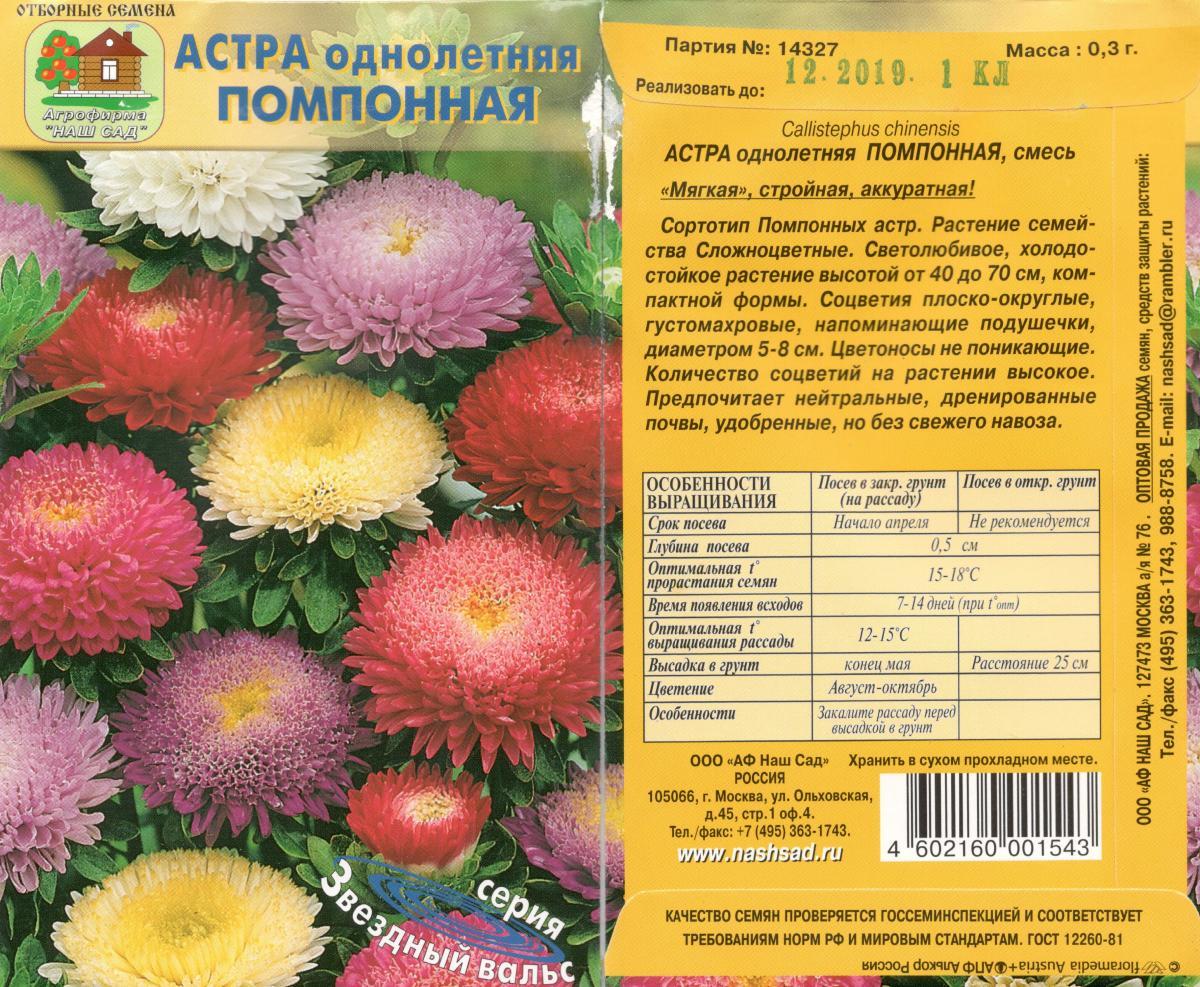 Выращивание многолетних астр из семян