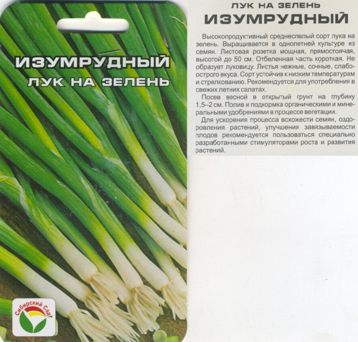 Все о выращивание зеленого лука из семян 728