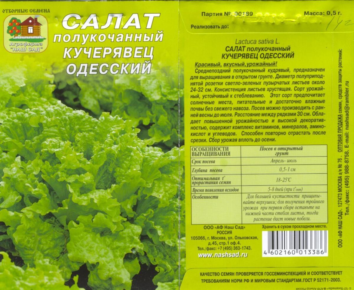 Салат кучерявец одесский выращивание из семян