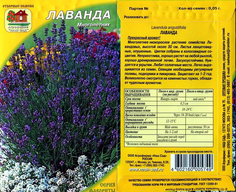 Лаванда узколистная выращивание из семян в домашних условиях - Lance-lot.ru